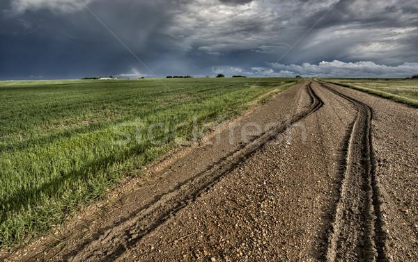 Mud Tire Tracks Stock photo © pictureguy