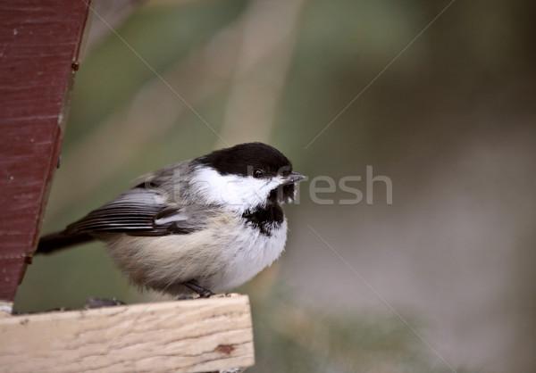 鳥 色 デジタル 自然 水平な 野生動物 ストックフォト © pictureguy