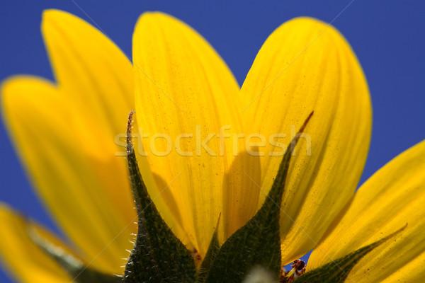 Koc kwiat saskatchewan przydrożny podróży Zdjęcia stock © pictureguy