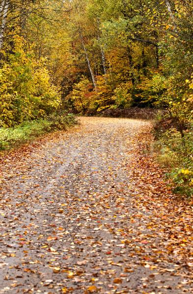 Najaar kleuren weg park ontario Canada Stockfoto © pictureguy