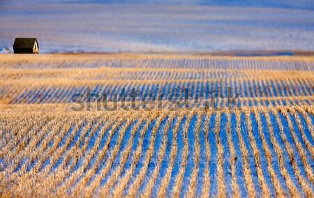Préri tájkép tél Saskatchewan Kanada borosta Stock fotó © pictureguy