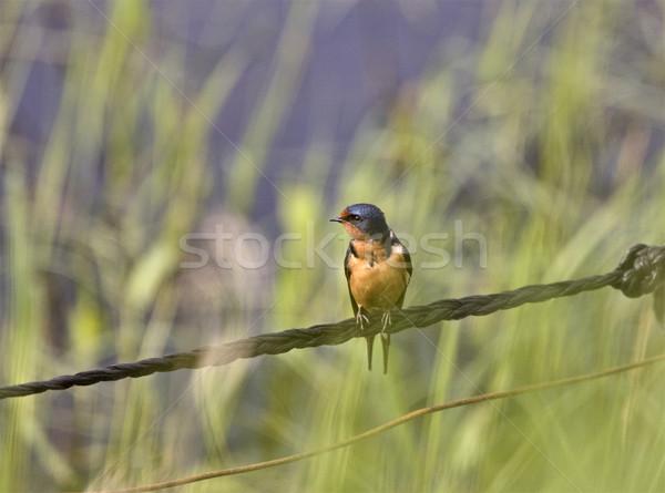 納屋 線 サスカチュワン州 カナダ 羽毛 黒 ストックフォト © pictureguy