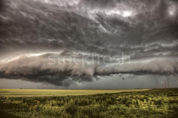Viharfelhők Saskatchewan búza mezők égbolt természet Stock fotó © pictureguy