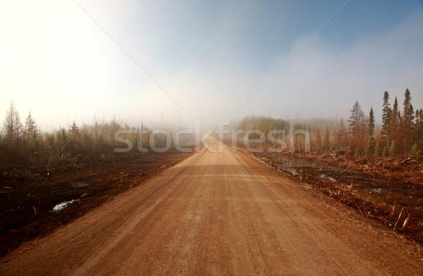 Mistig ochtend weg voorjaar saskatchewan Stockfoto © pictureguy