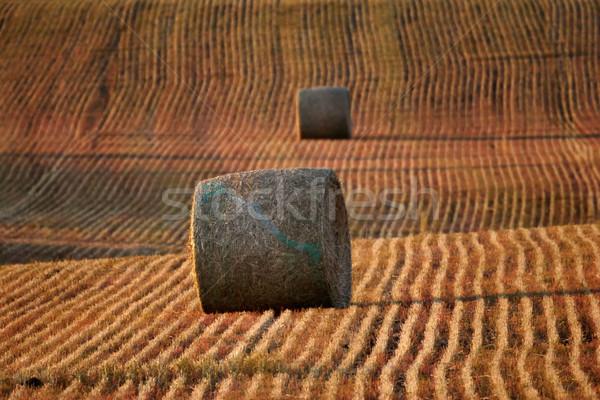 Saman saskatchewan anız alan manzara düşmek Stok fotoğraf © pictureguy