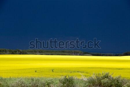 Stock photo: Prairie Storm Clouds