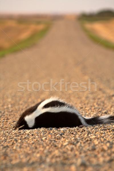 Dode stinkdier saskatchewan kleur foto Stockfoto © pictureguy