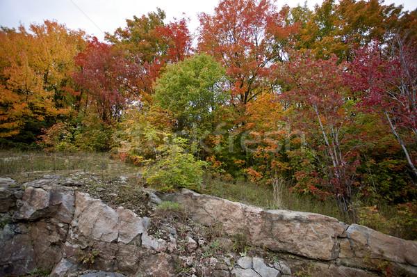 Algonquin Park Muskoka Ontario Stock photo © pictureguy