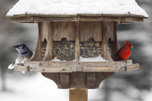 Cardinal at Bird Feeder Stock photo © pictureguy