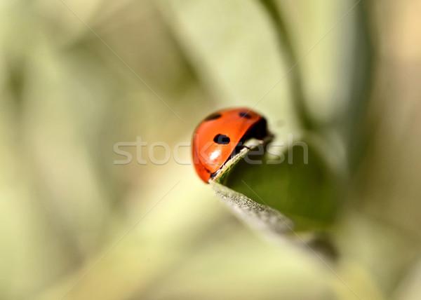 Ladybug roślin saskatchewan liści kolor cyfrowe Zdjęcia stock © pictureguy