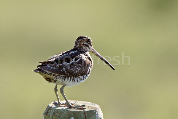 Cerca post aves digital animales horizontal Foto stock © pictureguy