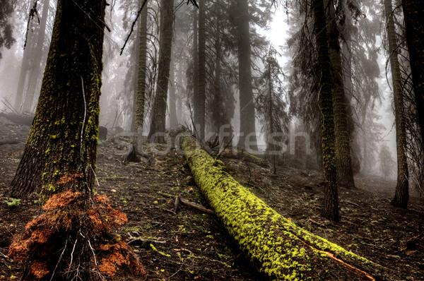 Bujny lasu górskich parku dolinie Zdjęcia stock © pictureguy