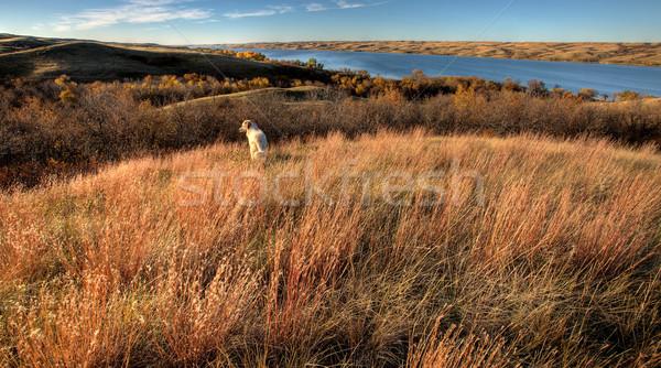 Otono vista saskatchewan libra lago perro Foto stock © pictureguy