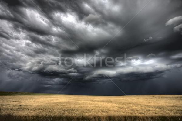 Saskatchewan trigo campos céu Foto stock © pictureguy