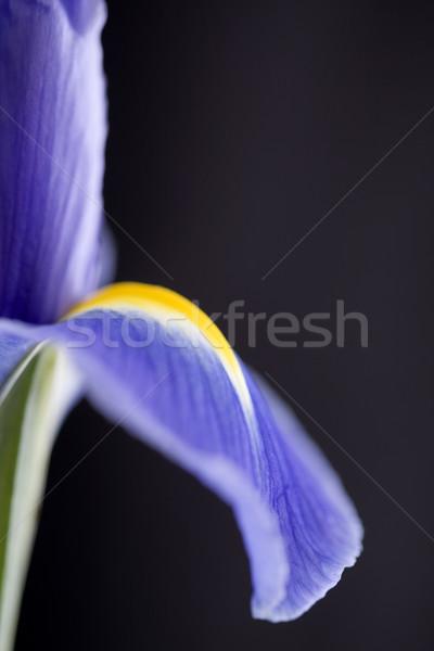 írisz makró harmat cseppek stúdió természetes fény Stock fotó © pictureguy