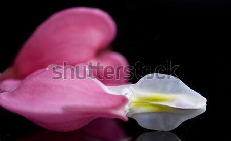 Stok fotoğraf: Makro · kanama · kalp · çiçek · stüdyo