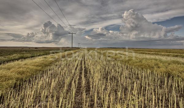 Anız alan fırtına gökyüzü gün batımı yeşil Stok fotoğraf © pictureguy