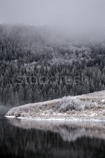 Ciprus dombok tél Kanada Saskatchewan Stock fotó © pictureguy