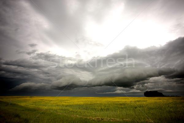 Saskatchewan farm campo primo piano pioggia Foto d'archivio © pictureguy