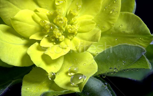 Yellow Flower Stock photo © pictureguy