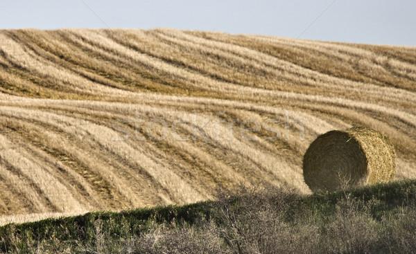 Hay Bale  Stock photo © pictureguy
