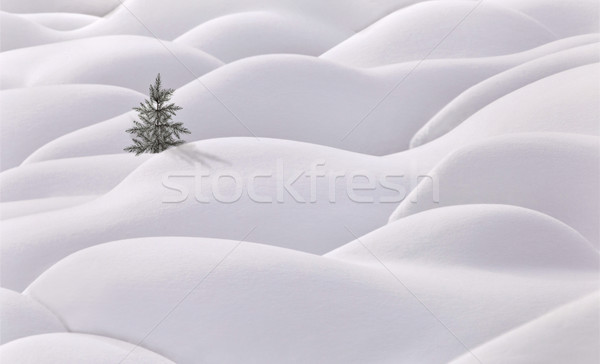 Moguls and tree Stock photo © pictureguy