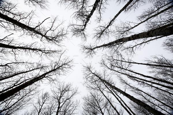 Alberi saskatchewan inverno cielo foresta bellezza Foto d'archivio © pictureguy