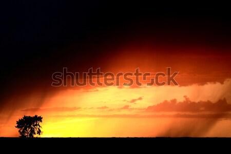 Wygaśnięcia deszcz sceniczny saskatchewan drzewo chmury Zdjęcia stock © pictureguy