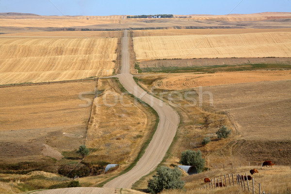 Scenic view of the Saskatchewan crop fields Stock photo © pictureguy