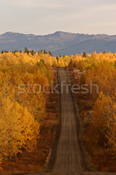 Autumn colored trees along road in British Columbia Stock photo © pictureguy