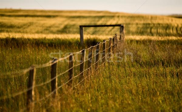 Préri kerítés vonal nyár Saskatchewan Kanada Stock fotó © pictureguy