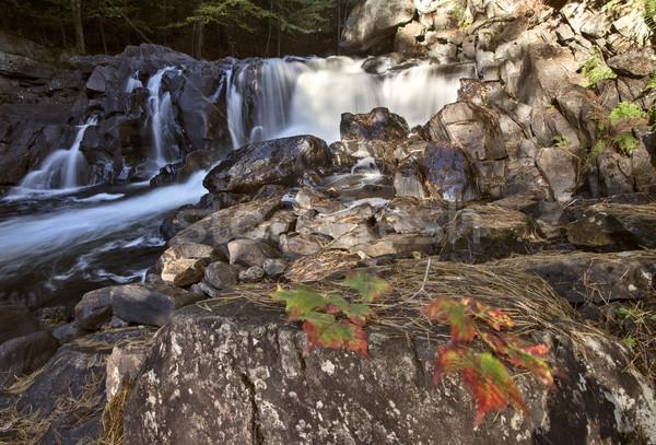 парка Онтарио водопада осень осень цветами Сток-фото © pictureguy