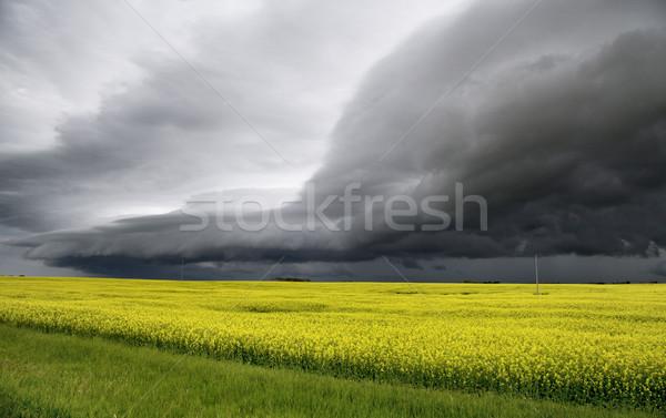 Stock fotó: Viharfelhők · Saskatchewan · polc · felhő · baljós · figyelmeztetés
