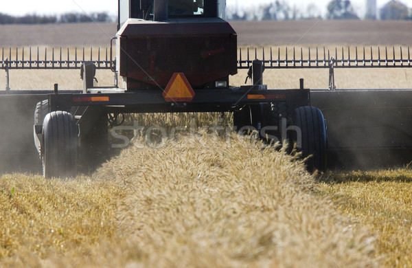 Harvest Combining Saskatchewan Stock photo © pictureguy