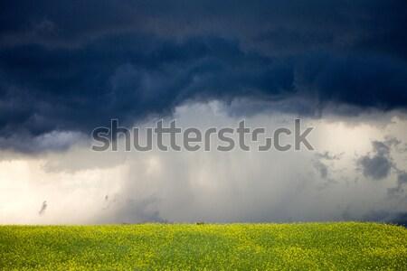 Burzowe chmury saskatchewan preria scena Kanada gospodarstwa Zdjęcia stock © pictureguy