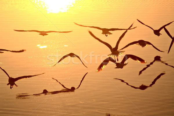 Gulls in flight over Buffalo Pound Lake in Saskatchewan Stock photo © pictureguy