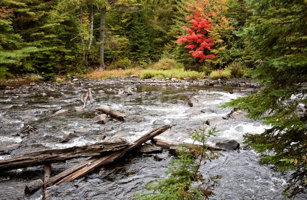 Parco ontario caduta autunno colori foresta Foto d'archivio © pictureguy