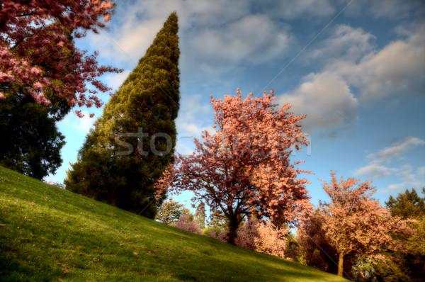 washington park portland Stock photo © pictureguy