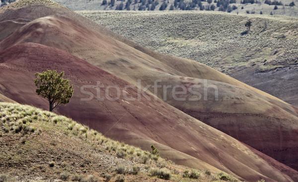 描いた 丘 オレゴン州 カラフル 表示 赤 ストックフォト © pictureguy