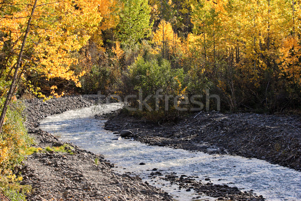 Autumn colored Aspens along British Columbia creek Stock photo © pictureguy