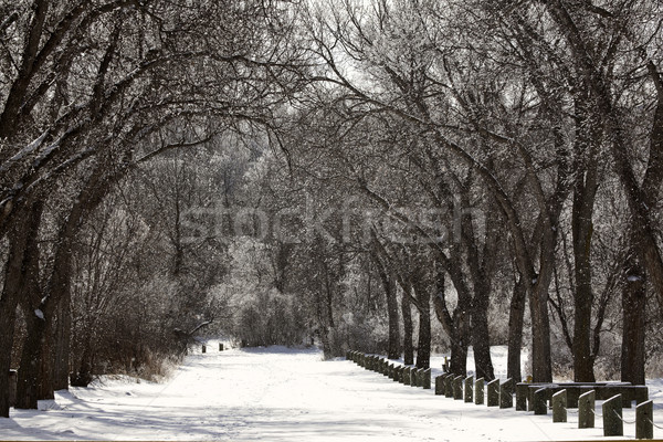 Snow covered road in Wakamow Park in Moose Jaw Stock photo © pictureguy