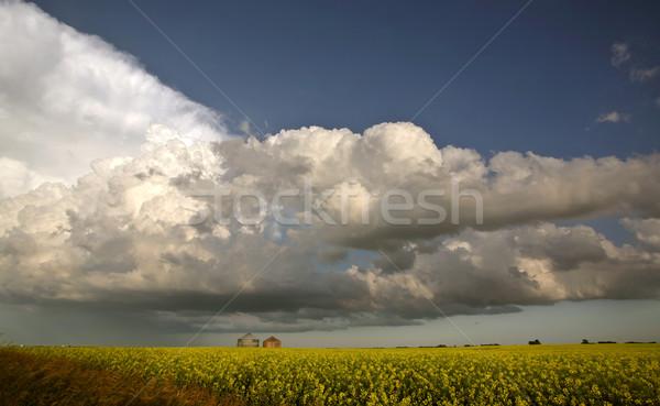 Burzowe chmury saskatchewan wole niebo chmury deszcz Zdjęcia stock © pictureguy