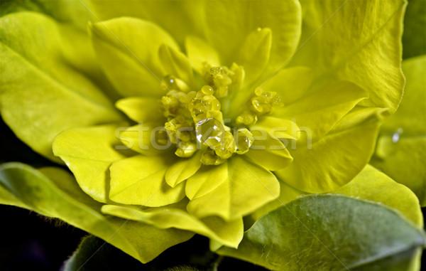 żółty kwiat parku ogród saskatchewan piękna Zdjęcia stock © pictureguy