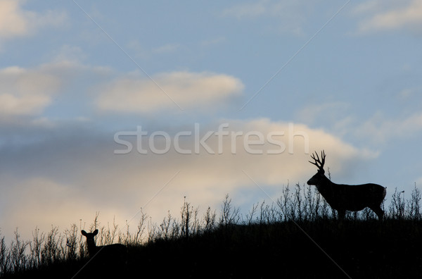Deer Silhouette Stock photo © pictureguy