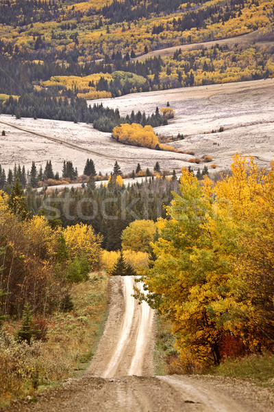 Scenic road in autumn through Cypress Hills Park Stock photo © pictureguy