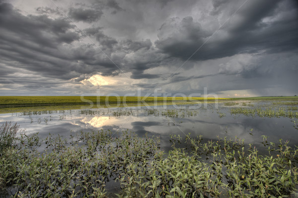 Slough pond and crop Stock photo © pictureguy