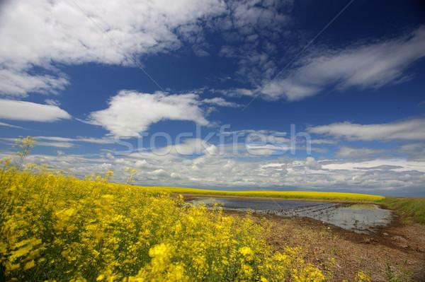 Сток-фото: пруд · Саскачеван · Канада · воды · трава