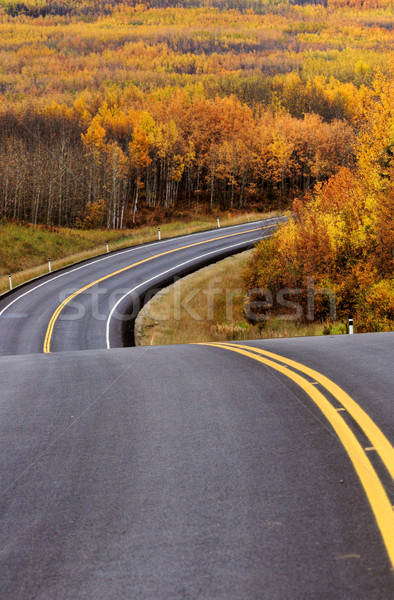 Highway approching Aspen forest in British Columbia Stock photo © pictureguy