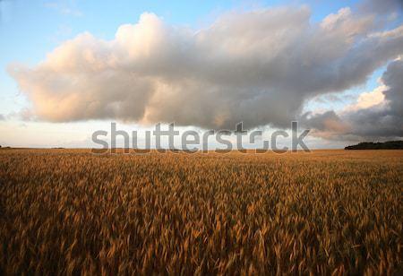 Grano scenico saskatchewan nubi strada Foto d'archivio © pictureguy