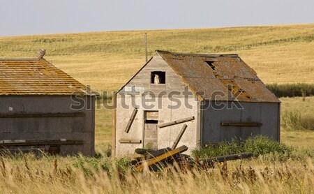 Stock fotó: Vidéki · Saskatchewan · nyár · termés · Kanada · égbolt
